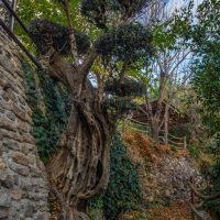 El Brazal. Bonsai camino