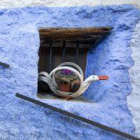 El Brazal. Pato ventana